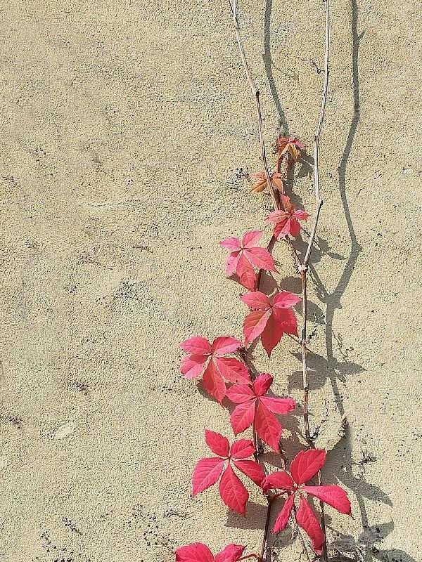 红叶.jpg