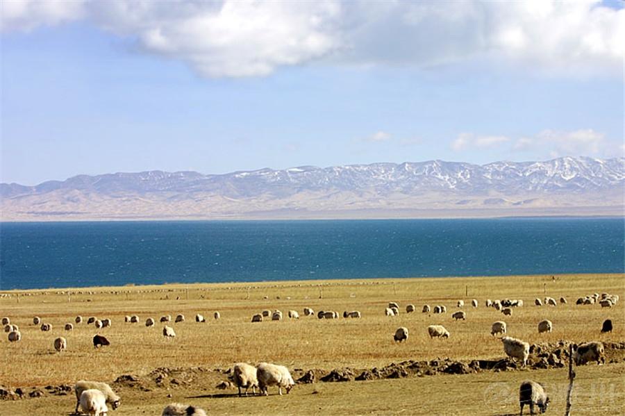 藏羚羊.jpg