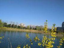 早起的人儿享美景(南谯区政府随拍)
