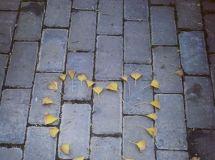 叶子的离开是风的追求还是树的不挽留