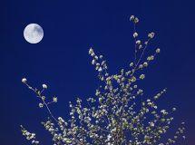 夜沐春滁丰乐月,灯洒梨花满城春!