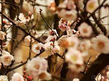 春天的诱惑.................
